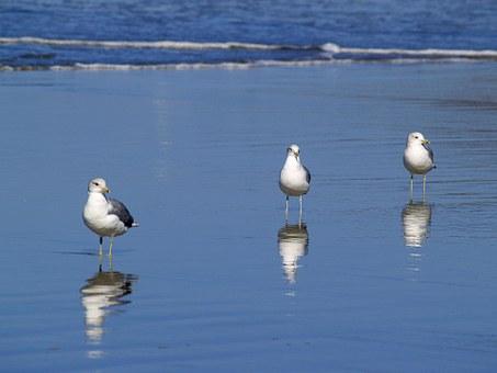 seagulls-51019__340