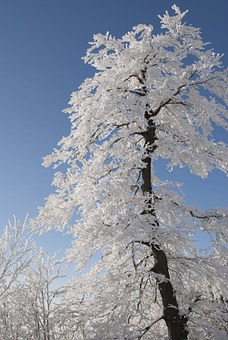 tree-479885__340