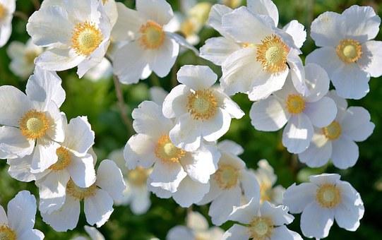 white-167895__340